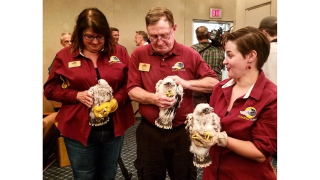 Banding ceremony held for falcon chicks hatched in downtown Fort Wayne