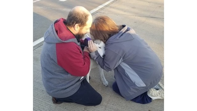 Dog reunited with owners after fleeing interstate crash